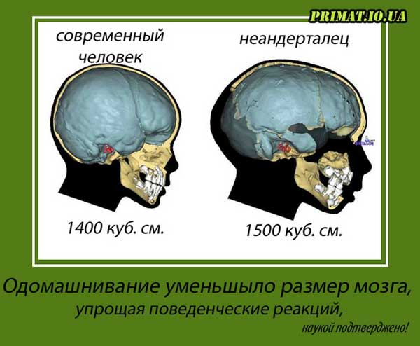 Эти факты о мозге знают немногие