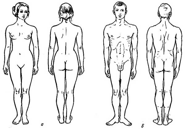 От чихания до роста ногтей — вот 100 самых странных и интересных фактов о человеческом теле